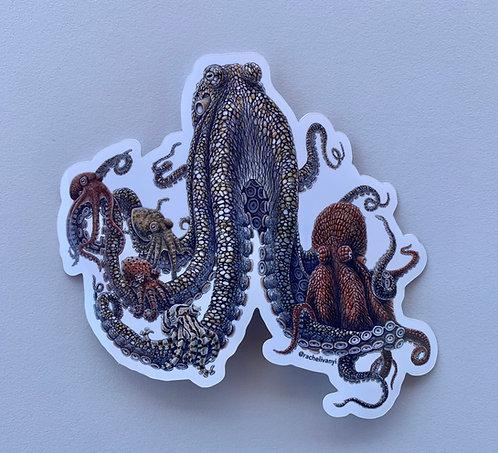 Octopus Sticker by Rachel Ivanyi