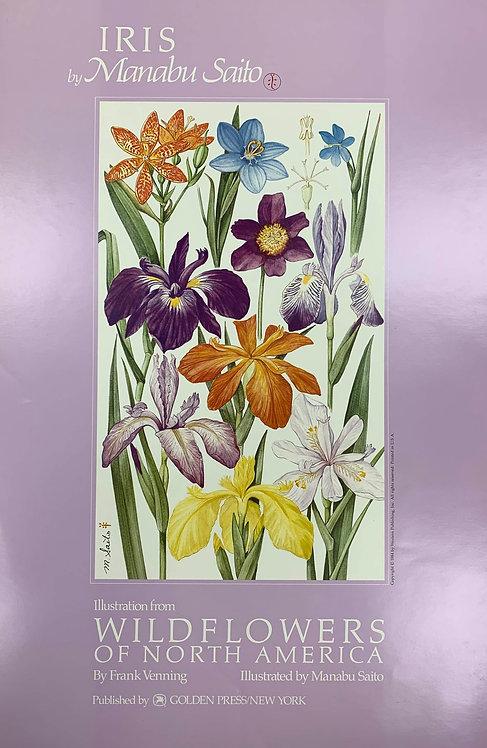 Iris Poster by Manabu Saito