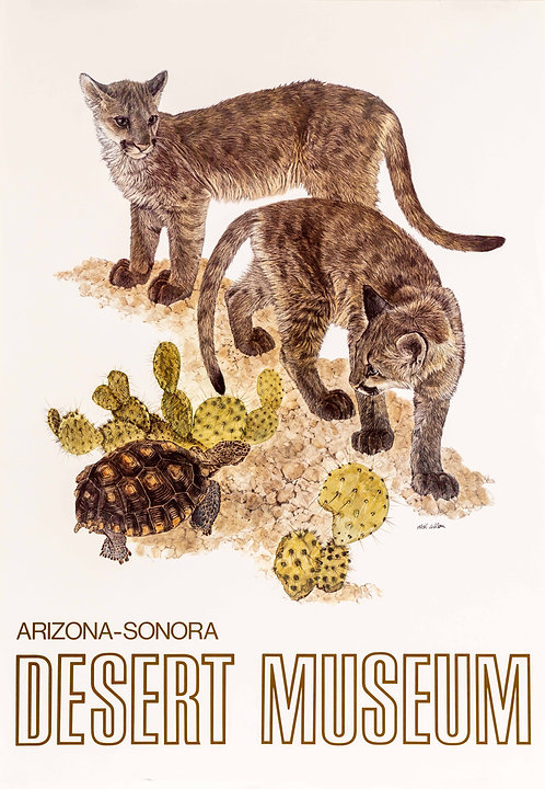 """Two Young Cougars & a Tortoise"" Poster by Nick Wilson"
