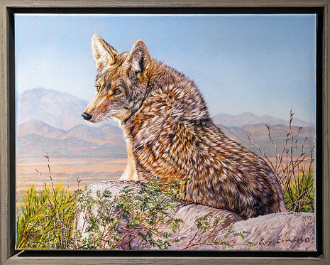"""Coyote Pretty"" by Guy Combes"