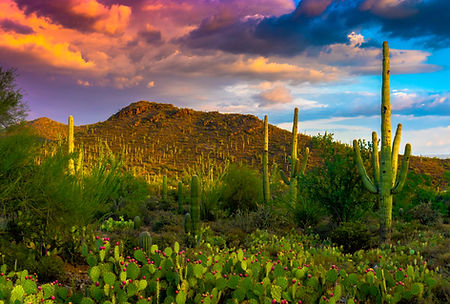 Sonoran Desert photographed by Jay Pierstorff