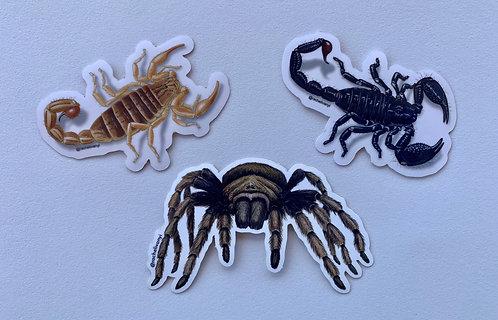 Scorpions & Tarantula Stickers by Rachel Ivanyi (3-Pack)