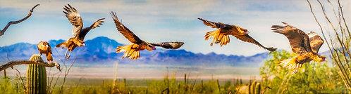 Flight of the Caracara by Jay Pierstorff