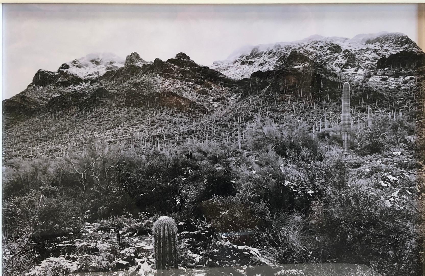 """Sonoran Snow"" by Jim McWilliams"