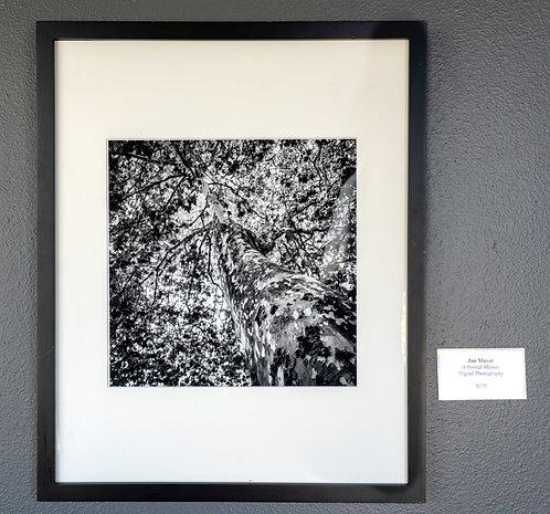 Arboreal Mosaic by Jan Mayer
