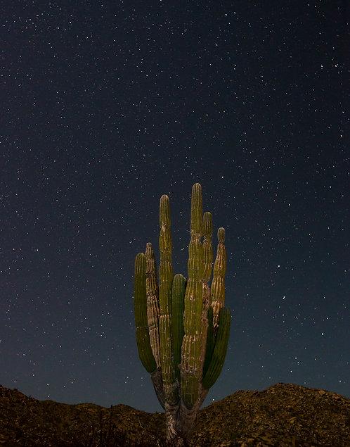 Cardon and Big Dipper by Carlos Navarro