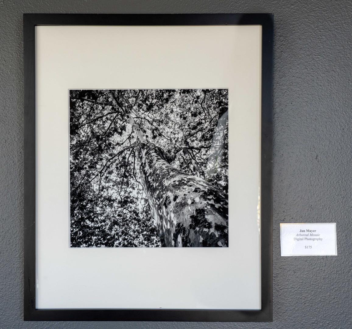 Jan-Mayer-Arboreal-Mosaic.jpg