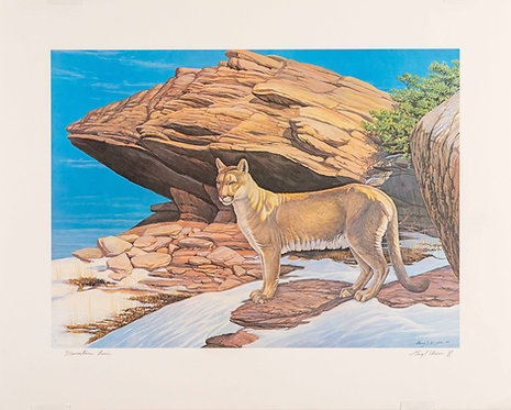 Mountain Lion Print by Gary J. Dixon