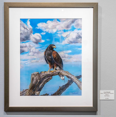 Harris's Hawk on his Sonoran Throne by Carol Bendell