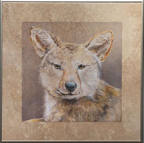 Coyote by Janie Gildow