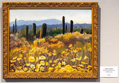 Blooming Brittlebrush by Ellen Cholski
