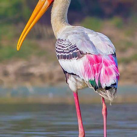 Migratory Birds Conservation| Stephen Javed