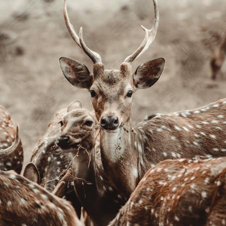 Photography | Mostafizur Mollah