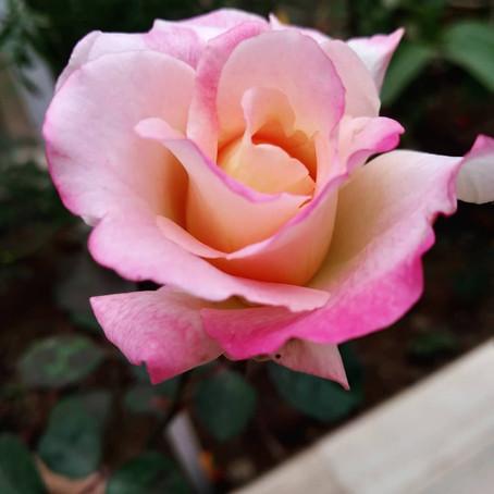 Gardening| Priya Tomar