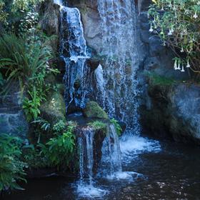 Adventures: LA Arboretum & Botanic Garden