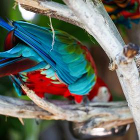 Adventures: San Diego Zoo