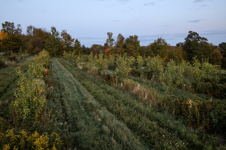 planting rows at anthill farm agroforestry