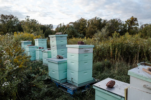 produce boxes at anthill farm agroforestry