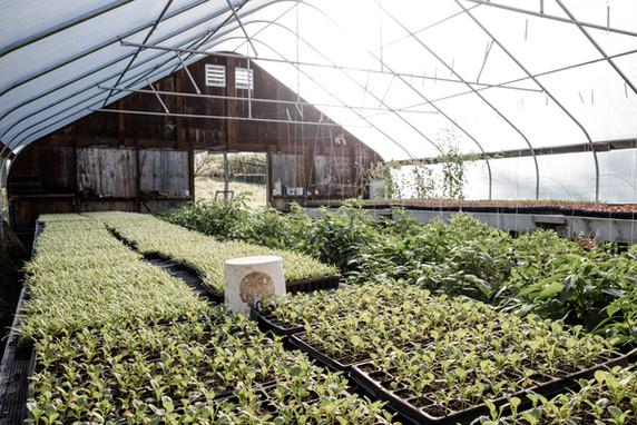 greenhouse interior anthill farm agroforestry