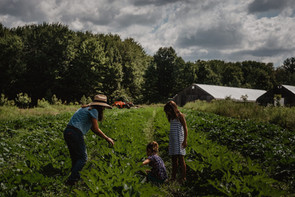 family gathering produce at anthill farm agroforestry