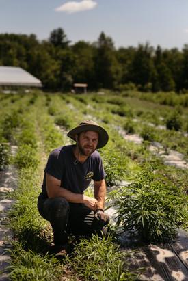 tending hemp anthill farm agroforestry