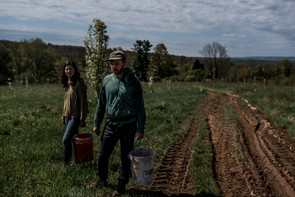 early harvest at anthill farm agroforestry