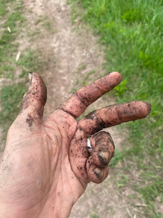 soil on a hand at anthill farm agroforestry