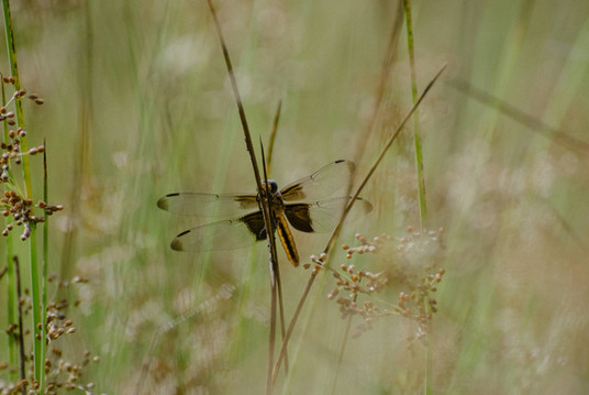 dragonfly on a plant at anthill farm agroforestry