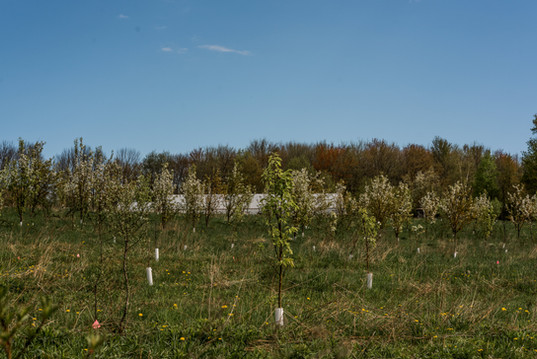 young fruit trees at anthill farm agroforestry