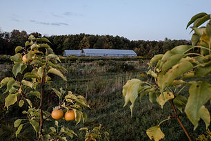 Pear trees and greenhouses on Anthill Farm