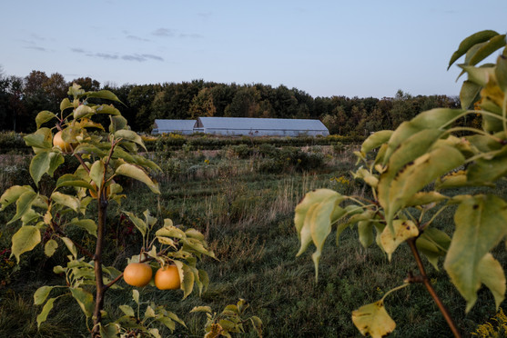greehouses at anthill farm agroforestry