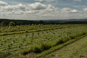 large open fields at anthill farm agroforestry