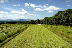 large field at anthill farm agroforestry