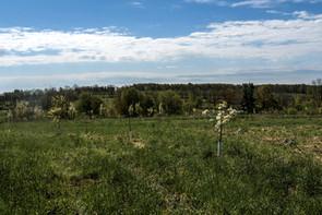 farmland of anthill farm agroforestry