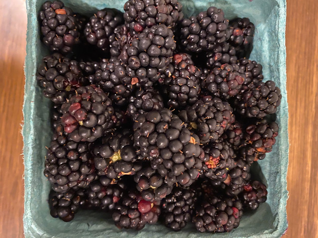punnet of fresh blackberries from anthill farm agroforestry