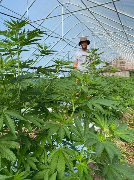 harvesting hemp anthill farm agroforestry