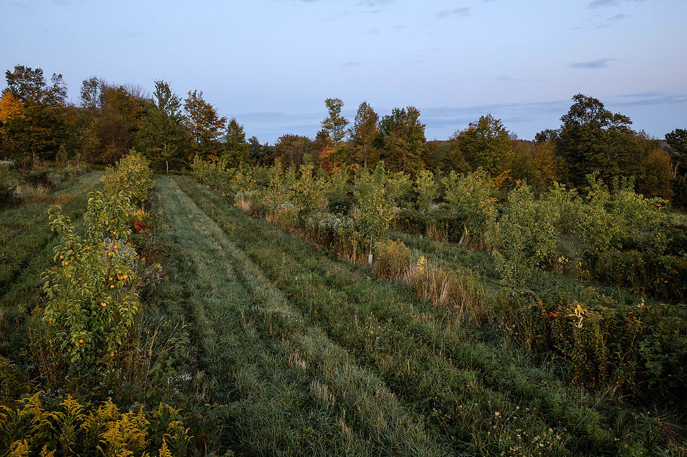 rows of different fruits at anthill farm agroforestry