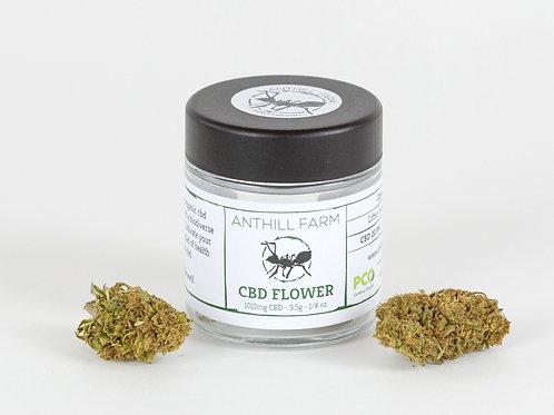Lifter - Organic CBD Hemp Flower 2020 harvest