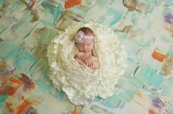 Charlotte Newborn Photography-IBR