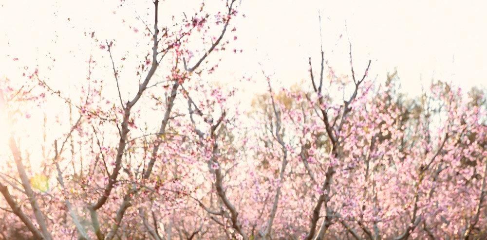 IBR Peach Blossom Mini Session