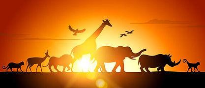 safari 3.jpg