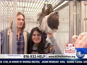 Jungle Law Group Sponsors Pet Telethon