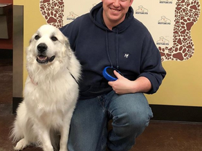 Samson has a furrever home!