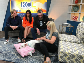 KC Live with Laggie & Unleashed Pet Rescue