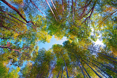 Arashiyama Sky -ARTLIT™