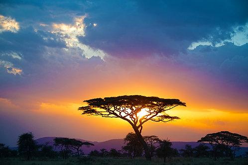 Full African Sunset - ARTLIT™