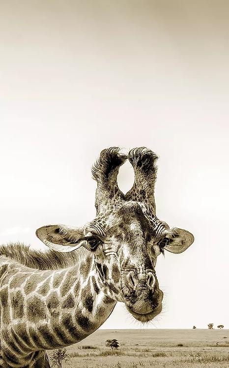 The Flirty Giraffe - Sepia - ARTLIT™