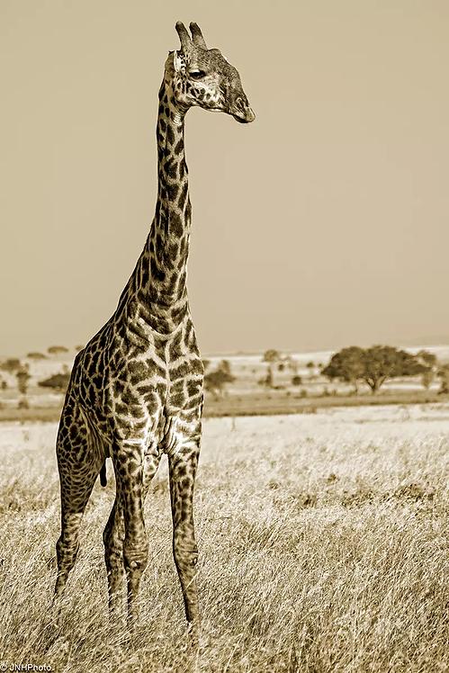The Casual Giraffe - ARTLIT™