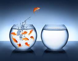 exit goldfish