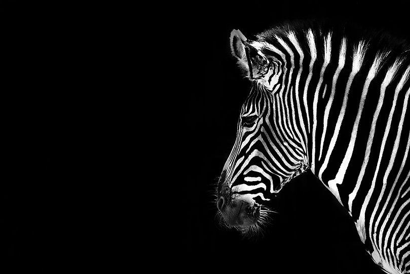 Artfully Giving Black & White Pro Photography